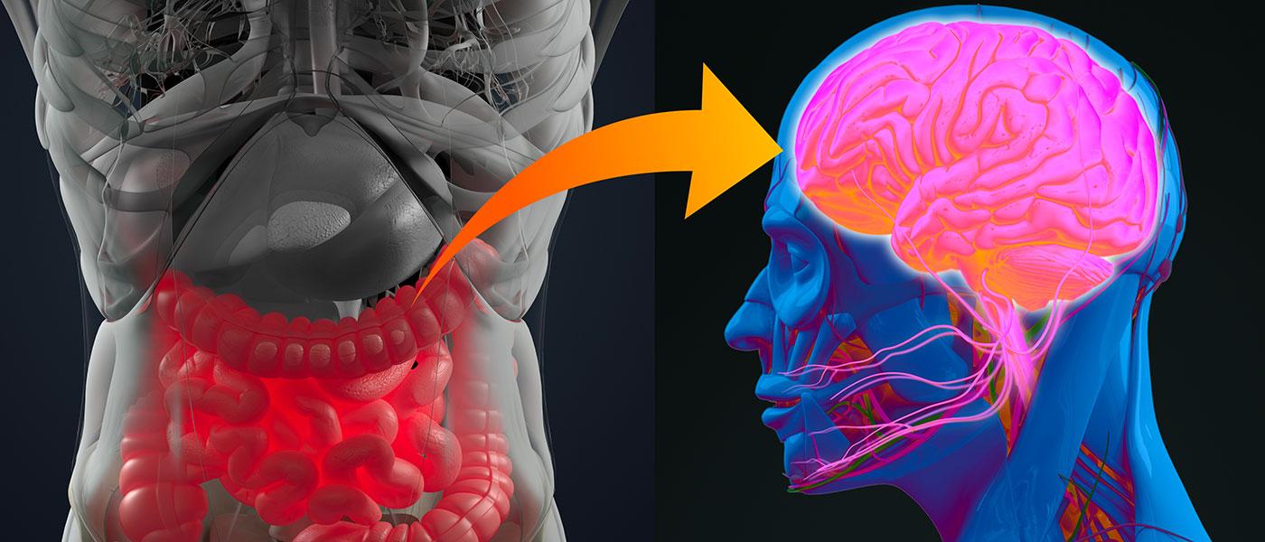 Alimentazione e cervello